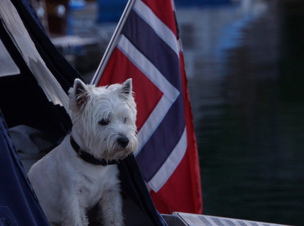 081913 16 The Scottish Terrier from the Princess 65 so much character